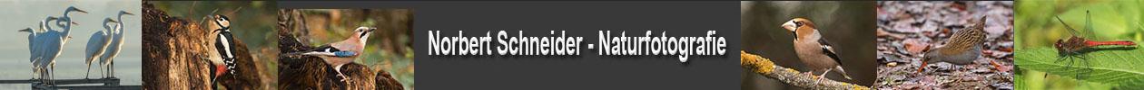Schneider-Naturfotos
